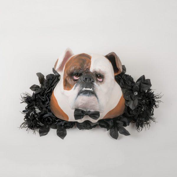 Achille le bulldog anglais